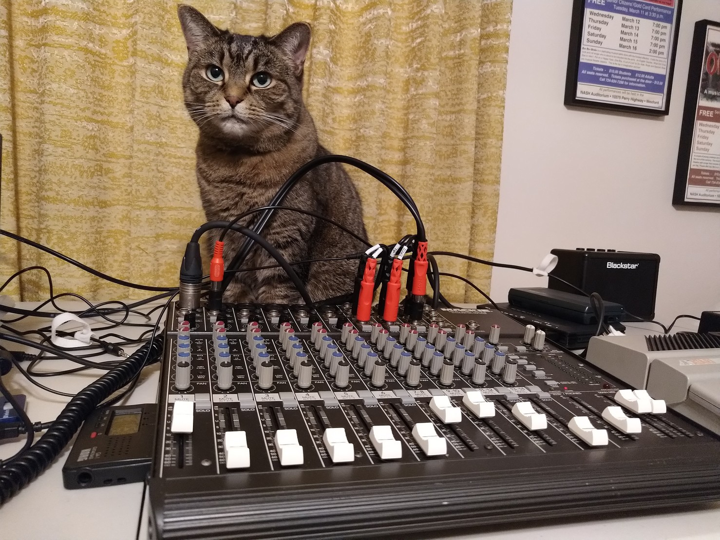 Brown tabby cat sitting behind a sound console.